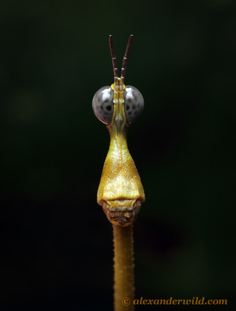 Alex Wild Photography - Insect Photography - Insect Pictures : Insects